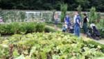 Museumtuin blikt dankzij corona terug op bloeiende zomer
