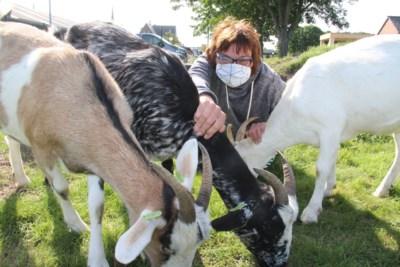 """Verwaarloosde geitjes helpen patiënten: """"Bij Lily, Trudy en Stella kunnen we even onze gedachten verzetten"""""""