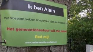 """Bomen in Westmalle krijgen een naam:""""Alle paardenkastanjes hier vragen om gered te worden"""""""