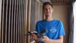 """Snelste jonge duif van België komt uit hok van Philip (30): """"En plots werd mijn deur platgelopen door Chinese makelaars""""<BR />"""