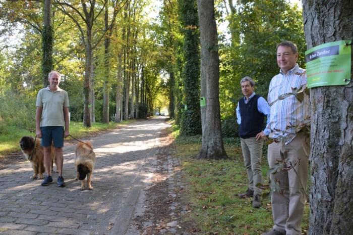 """Bomen schreeuwen in Mostheuvellaan: """"Red ons, de gemeente wil ons dood"""""""