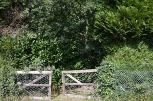 Gemeente Zandhoven koopt bos