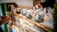 Ook tweede cannabiswinkel in Hasselt moet opkrassen