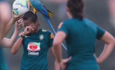 Hilarisch: papegaai komt Braziliaanse match verstoren, in Engeland wil een lama een potje meespelen