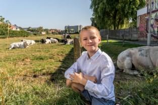 Liever park dan verkaveling: Sjarel (9) zoekt 3,1 miljoen euro om vastgoedproject af te ketsen
