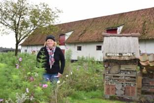 Saga over kippenkwekerij Stuiver houdt aan: Raad van State fluit minister terug