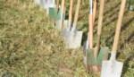 Hallenaren kunnen plantgoed bestellen aan voordeeltarief