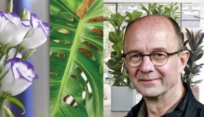 Het is tijd voor kamerplanten: onze groenman tipt welke planten je waar zet en hoe je ze in leven houdt
