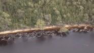 Opnieuw grienden gestrand op zandbanken in Tasmanië, meer dan de helft is al overleden