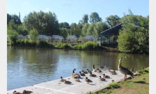 Politie plukt 'hitsige zwemmer' uit vijver van park Novarode