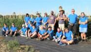 """Windkrachters tuinieren mee op zelfoogstboerderij van boer Davy: """"Onze gasten beleven hier mooie dagen"""""""