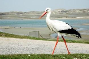 Vogeltrekdagen in Zwin