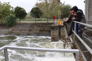 Vissers helpen vissen naar zuurstofrijker Denderwater