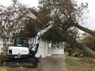 Drie grote bomen komen op villa terecht in Oostduinkerke