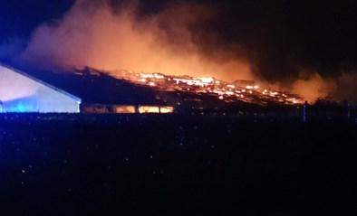 Duizendtal biggen sterft bij zware brand in varkensstal
