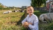 Ondanks actie voor park van Sjarel (9): project met woningen komt er tóch
