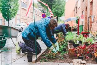 Grijs wordt groen: bewoners en vrijwilligers vervangen trottoir door tuintjes in Gentbrugge