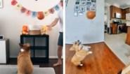 De hond die geen enkel schot mist, baasje leidt zijn viervoeter op tot basketbalster