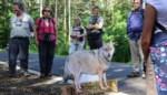 Begeleide wandeling leert over wolven in Kempen