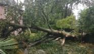 """Storm Odette zorgt voor paar honderd brandweeroproepen: """"Maar hebben al erger meegemaakt"""""""