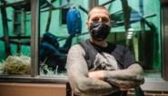 """Nederlandse superfan heeft tattoos van alle gorilla's van de Zoo: """"Ze zijn zo mooi"""""""