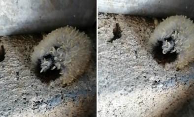 Man vindt bizar beest maar begraaft het in de tuin zodra hij ontdekt wat het is