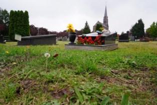 Gras begraafplaatsen staat te hoog: Gent herbekijkt onderhoud na klachten
