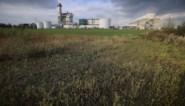 Tessenderlo krijgt grootste gascentrale van het land