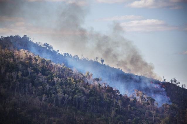 Meer dan 100 ngo's lanceren campagne #Together4Forests tegen ontbossing