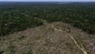 Nieuwe ecocide-wet maakt voedselimport uit illegale gekapt bos strafbaar