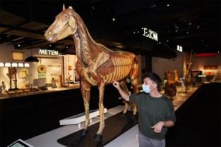 800 unieke objecten in nieuw Gents museum: van lijkenvliegjes tot een uitgestorven wolf