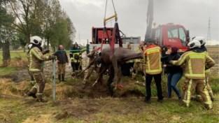 Brandweer zet zwaar materieel in om paard uit greppel te redden