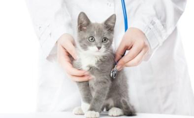 Van blaasproblemen tot boos op het baasje: de vaakst voorkomende problemen bij katten (en hun oplossingen)