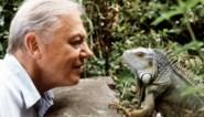 """Hij had """"te grote tanden om op tv te komen"""", maar op zijn 94ste is sir David Attenborough hotter dan ooit"""