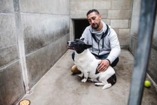"""Een dag in het asiel voor Werelddierendag: """"Geen enkel dier krijgt hier een spuitje, desnoods wachten we twee jaar op perfecte match"""""""