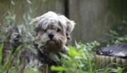 Dieren niet langer toegelaten op drukke evenementen en festivals in Leuven, wegens te stresserend
