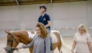 Paardenboer, maar zelf paardrijden? Boer Dries raapt moed bijeen in 'Boer zkt vrouw'