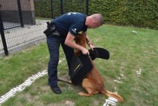 Steekwerende vesten beschermen politiehonden tegen messteken, beten én vuurwerk