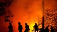 Bosbrandenseizoen in Californië breekt triest record: 4 miljoen hectare gaat in vlammen op