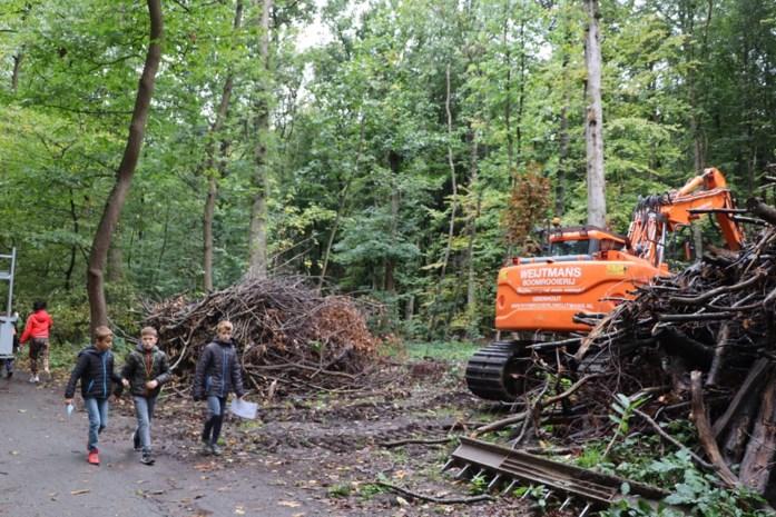 """Bomen gekapt """"voor veiliger Buggenhoutbos"""""""