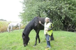 Echte liefde tussen paard en eigenaar: Marianne stapt 100 kilometer om haar zieke paard een toekomst te kunnen geven