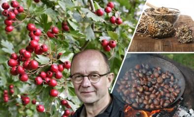 Tijd voor een boswandeling: onze groenman tipt welke vruchten u kan oprapen om thuis mee aan de slag te gaan