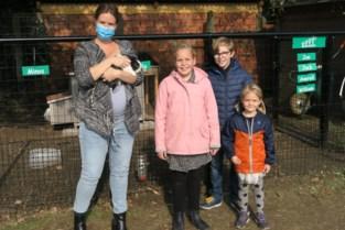 Basisschool krijgt nieuw dierenverblijf, camerabewaking moet tweede konijnenslachting vermijden