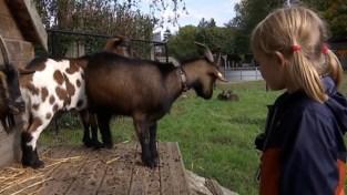 Terug dieren in De Boomgaard na aanval met BB gun