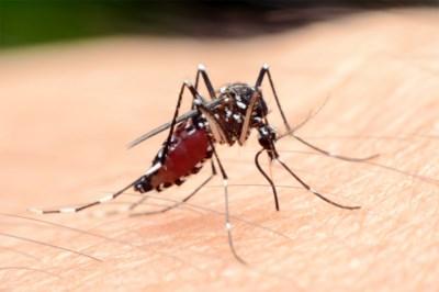 """Vlaams echtpaar overleed aan malaria, zonder op reis te zijn geweest: """"Mijn vader haatte vliegtuigen"""""""