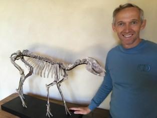 Lummense paardenchirurg koopt skelet van 35 miljoen jaar oud paard
