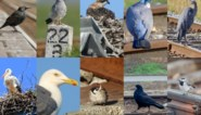 Kies mee de Vogel van het Jaar 2020