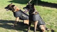 Brusselse politiehonden krijgen steekwerende vesten