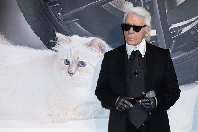 Choupette, de kat van Karl Lagerfeld, maakt comeback in nieuw filmpje