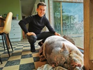"""Ilya (23) redt 120 kilo zwaar hangbuikzwijn Maybellie van de verdrinkingsdood: """"Dit zou ik geen tweede keer kunnen"""""""